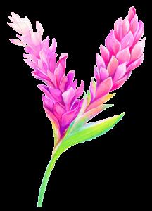 gingerflower